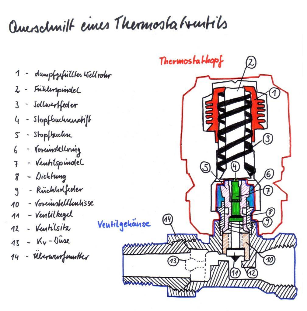 Querschnitt eines Thermostatventils